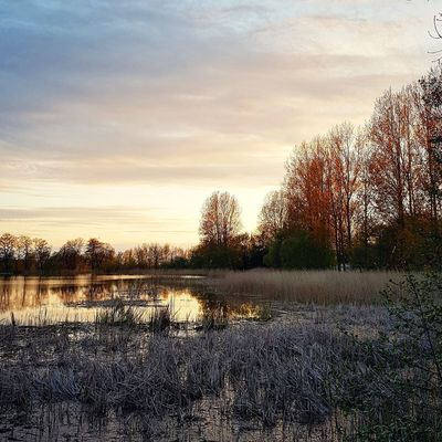 Water Sky Reflection Cloud - Sky Tranquility Outdoors No People Nature Day Sunset Sunlight Sunlight And Shadows Trees