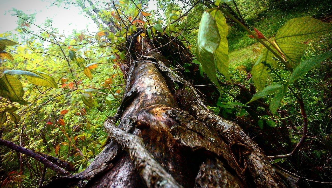 tree, nature, growth, tree trunk, no people, forest, branch, outdoors, day, green color, beauty in nature, leaf, close-up, animal themes