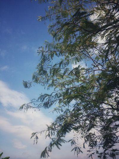 Feel the breeze Blue Sky Breeze Tree Branch Sky Tranquil Scene Calm Countryside Treetop Non-urban Scene Tranquility Scenics