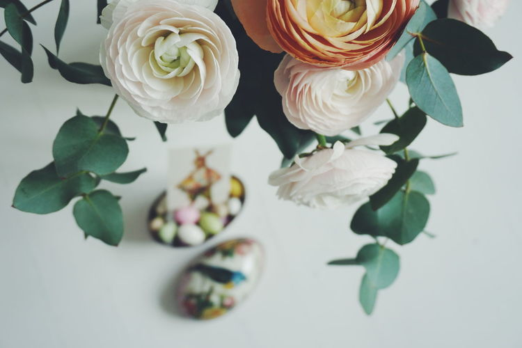 High Angle View Of Ranunculus Against Easter Eggs Against Over White Background