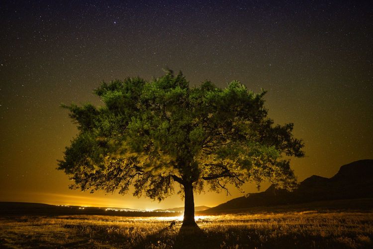 Astronomy Countryside Field Galaxy Landscape Lights On Nature Night No People Non-urban Scene Outdoors Sky Star - Space Stars Tranquil Scene Tranquility Tree Tree Tree Trunk