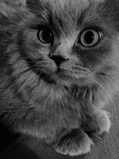 Cat Cat♡ Catsagram I Love My Cat
