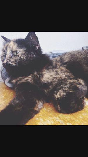 احلى قطه لﻻجمل قطه
