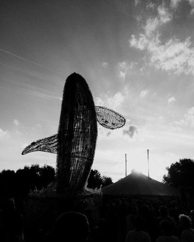 Tollwood Blackandwhite Whale Plastic Cloud Sky
