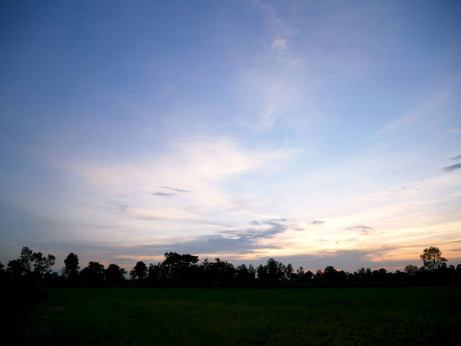 Beautiful tree and field landscape in Thailand. Beauty In Nature Cloud - Sky Environment Field Grass Idyllic Land Landscape Nature No People Non-urban Scene Outdoors Plant Rural Scene Scenics - Nature Sky Sunset Tranquil Scene Tranquility Tree