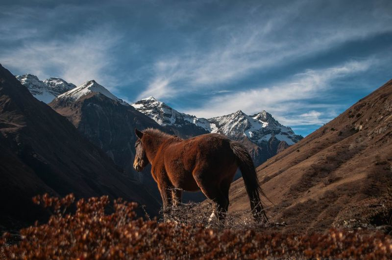 Horse standing on field by mountain against sky