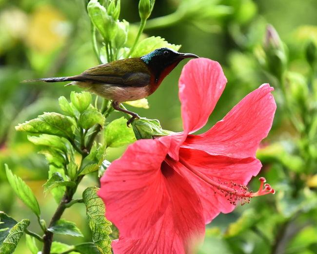 Perching Flower