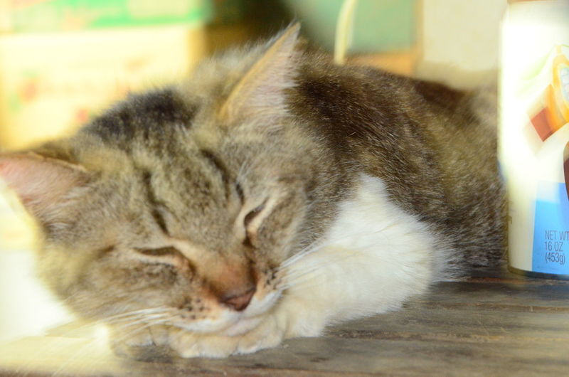 relax cat. Relax Cat Cat Pets Animal Close-up Napping One Animal Resting Sleeping