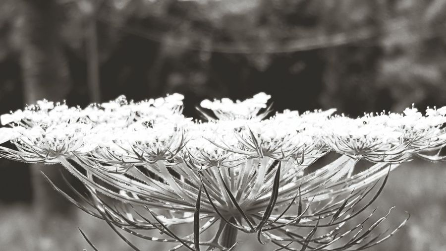 Flower, Nature & Beauty . Black & White .