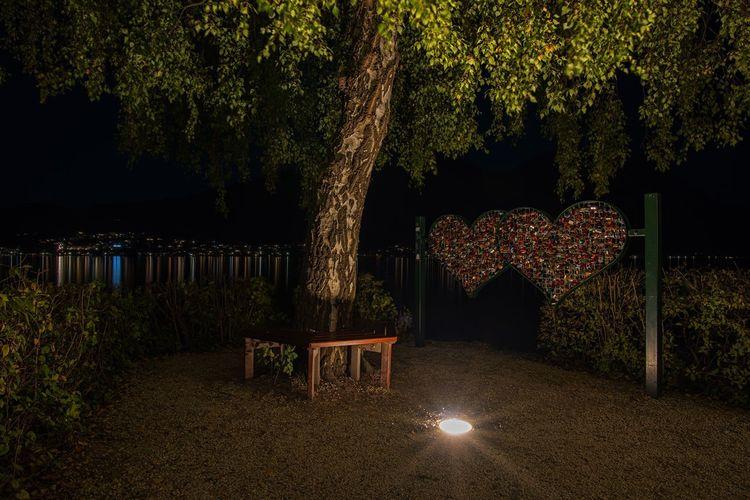 Illuminated plants in park at night