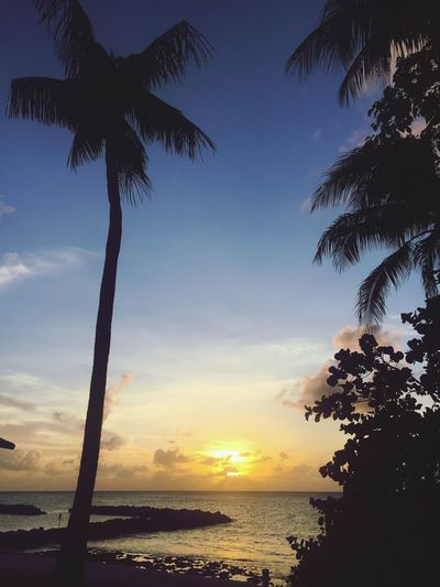 Sunset Landscape_photography Sunset Palm Tree Sky Sea Sevenmilebeach Island Cayman Islands Carribean