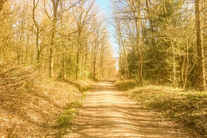 Tree Footpath The Way Forward Forest Nature Grass Outdoors Autumn Day Tranquil Scene Scenics Rural Scene Landscape Tranquility Single Lane Road No People Beauty In Nature Bare Tree Sky