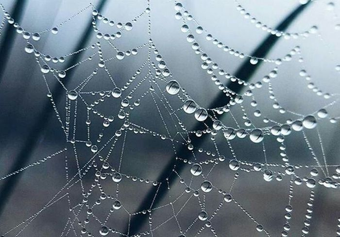 Spider Spoderweb Water Water Drop Drop Outdoor Morning