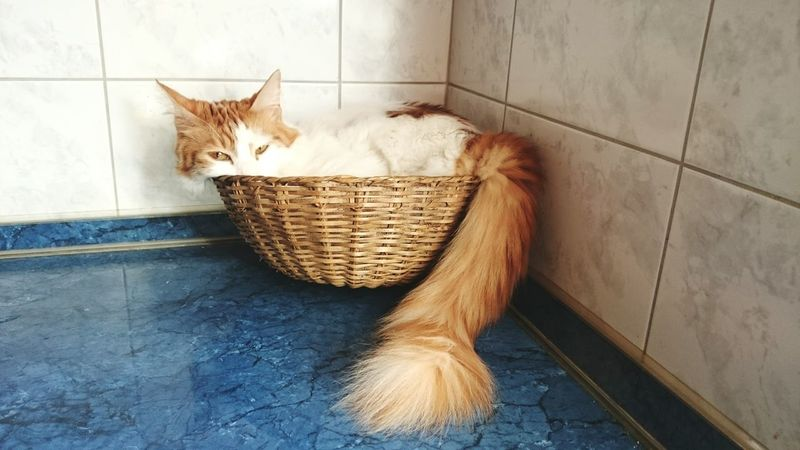 Catsofinstagram Cat♡ Mycat♥ Cats Of EyeEm Cat Lovers Catoftheday Relaxing FUNNY ANIMALS Pet Photography  Pets Corner