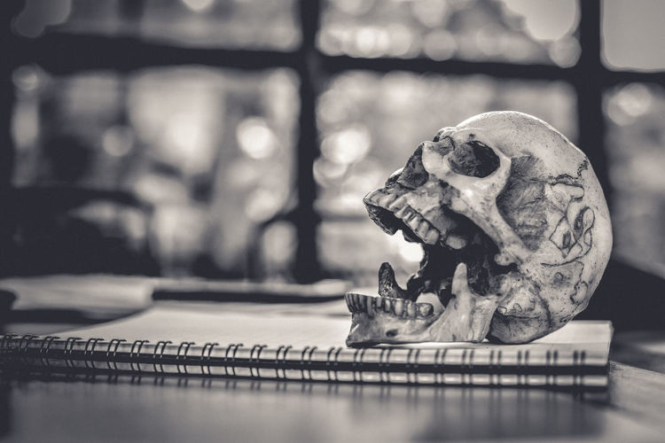 Close-Up Of Human Skull With Spiral Notebook On Table