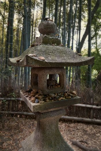 Shoren-in, Kyoto (May 2017) Japan Kyoto Shōren-in Forest Bamboo Banboo Forest Lantern Stone Lantern Historic Stone Material Japanese Culture Japanese Style Tree Trunk Beauty In Nature No People Nature Tree Textures And Surfaces Weathered Buddhism Dead Leaves Stones Memorial