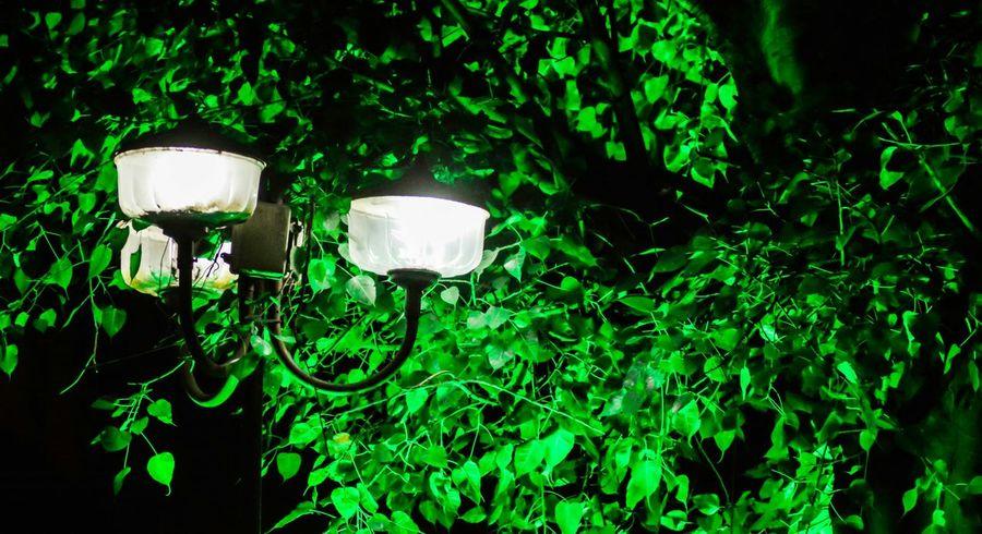 Night Lights Greenary Street Lights Night Photography Pune