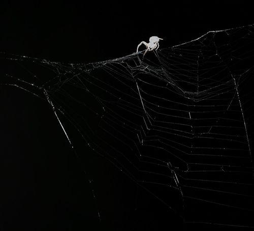 Красота в малом. паук паутина