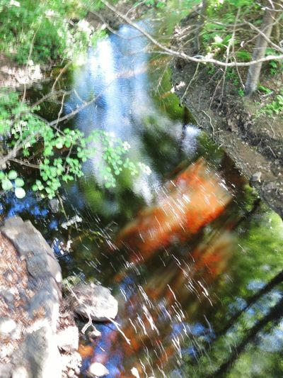 Nature Trekking Taberg Stream