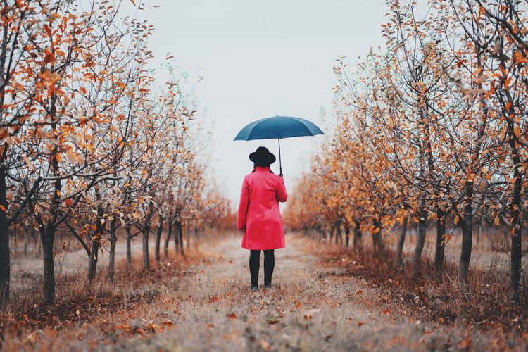 Woman in red coat and with umbrella between trees in apple garden at autumn season. Minimalism, travel, nature concept. Tree Umbrella Plant One Person Protection Full Length Real People Nature Rear View Standing Day Women Land Adult Lifestyles Security Growth Casual Clothing Change Outdoors Rain Warm Clothing