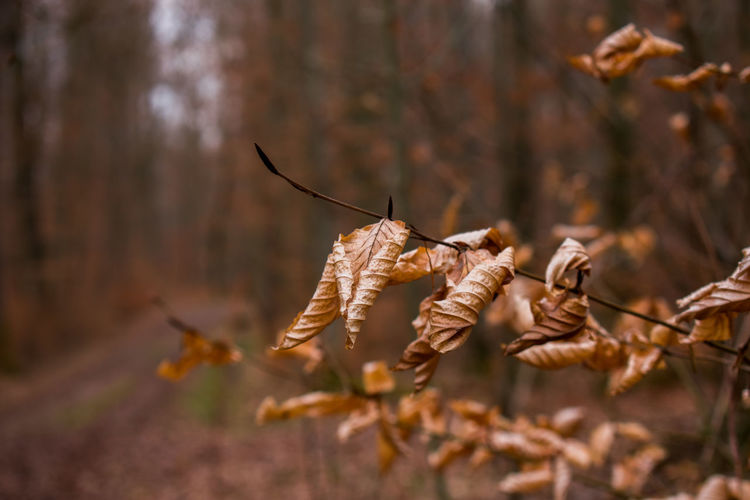 Dry Nature Tree Day Focus On Foreground Selective Focus Plant Close-up Forest No People Land Outdoors Autumn Plant Part Animal Wildlife Leaf Hanging Vulnerability  Branch Beauty In Nature Leaves Wilted Plant Dried