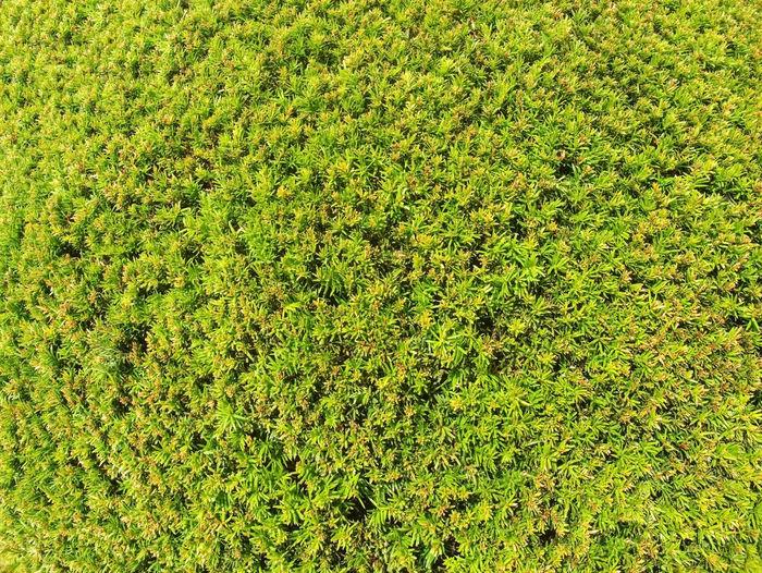 Full frame shot of plants growing on field