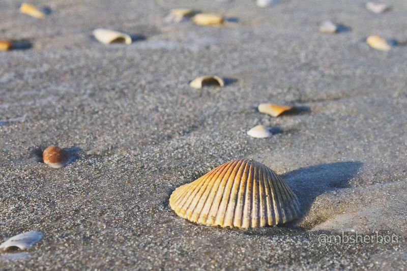 Seascape Sea Side Sea Shells Beach Nature Nature_collection Eye4photography  EyeEm Nature Lover Florida Sand