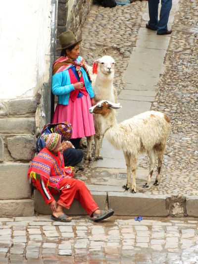 Peruvian Culture Peruvian Costume Peruvian Clothes Clothing Day Domestic Animals Full Length Outdoors Real People Traditional Clothing The Street Photographer - 2018 EyeEm Awards The Traveler - 2018 EyeEm Awards EyeEmNewHere