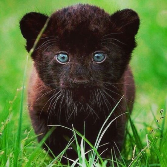 BlueEyes Blue Black Bellissimo Beautiful Animal WOW Wonderful Animale Preferito :3