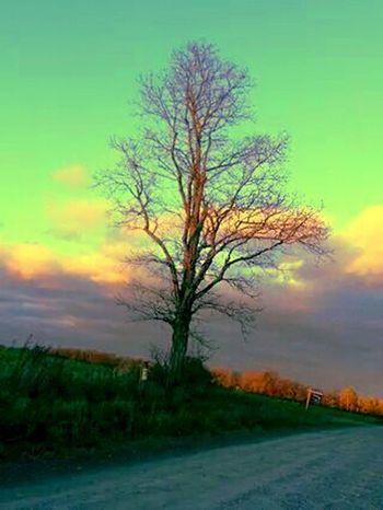 Good Morning Beautiful People Happy Hump Day NEM Landscapes NEM Painterly