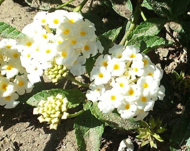 Sweet Sunny Feminine Happy Dainty Flowers Springtime EyeEmNewHere