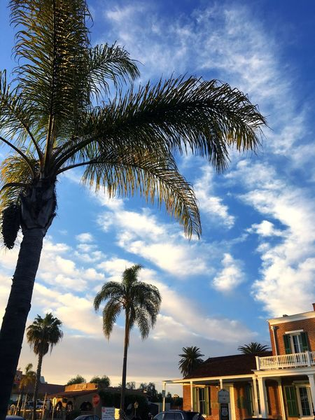 Old town new day EyeEmNewHere OldTownSanDiego Palm Tree