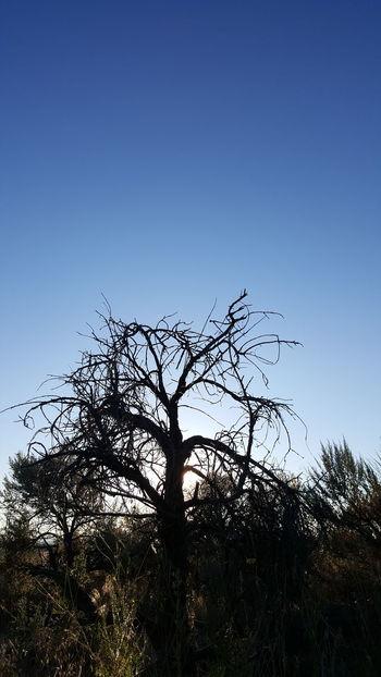 Bird Tree Bird Of Prey Clear Sky Flock Of Birds Silhouette Living Organism Sky Animal Themes