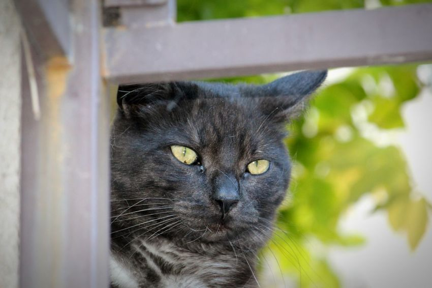 Domestic Cat Pets Domestic Animals Feline Animal Themes One Animal Mammal Black Color Animal Chats Animaux ❤️ Cats 🐱