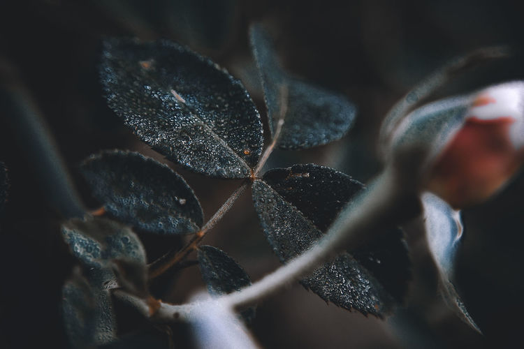 High angle view of plant leaves on metal fence