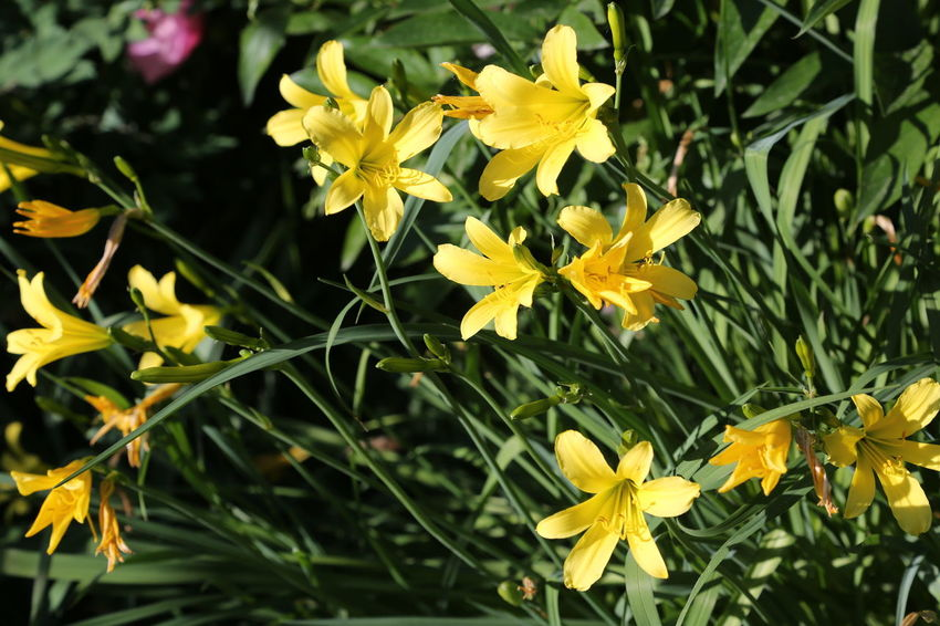Beauty In Nature Blooming Close-up Day Flower Flower Head Fragility Freshness Grass Growth Leaf Nature No People Outdoors Petal Plant Spring Yellow