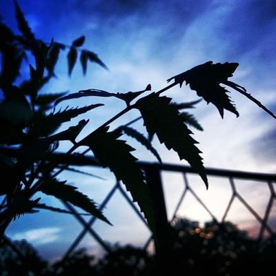 Instaludhiana Gogreen Sexyclouds Sunset Gagans_photography