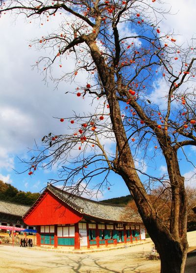 South Korea Temple Temple - Building Temple Architecture Autumncolors Autumn Beautifulnature Beautyinnature  Tree Sky Architecture Building Exterior Built Structure Tranquil Scene Branch Tranquility Thatched Roof Tree Trunk Bare Tree Rocky Mountains Mountain Range