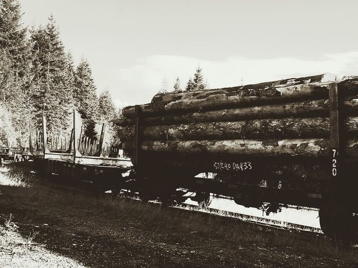 Logging Train September 2016 On Vancouver Island Near Woss BC logs wood trees export train railcar lumber raw logs forest