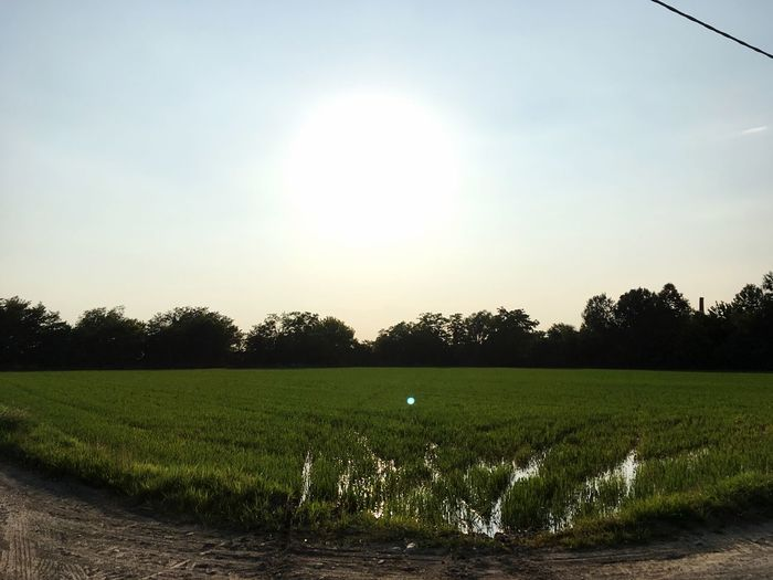 Rice Rice Field Rice Paddy Sky Plant Landscape Field Scenics - Nature Tranquility Growth Tranquil Scene Tree Beauty In Nature Nature Environment Sunlight Rural Scene No People Land