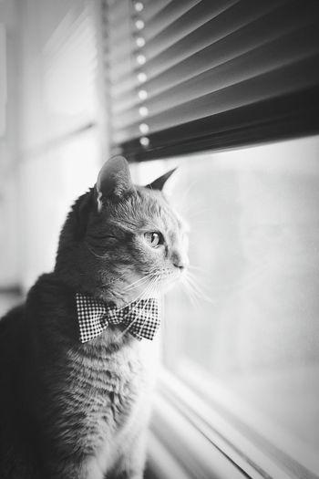 Cat Lovers Ilovemycat Ace Cat Ilovecats Acethecat Monochrome Blackandwhite Animals Cats Catace Kitty B&w Pet LittleDevil Cat♡ Window
