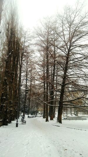 Snowy day in park Tranquil Scene Winter Wintertime Winter Trees Snowy Weather Outdoor Photography Snow On Branches Snow On The Trees Snow Winter Cold Temperature Nature Weather Tree Outdoors Tranquility Landscape