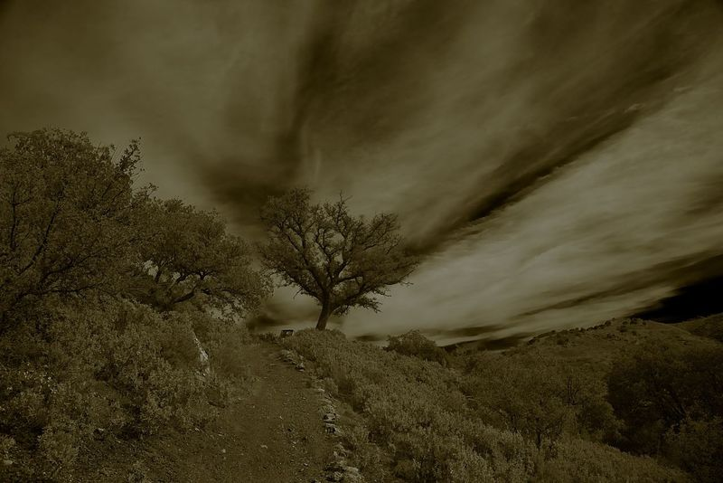 Tree in the Clouds Andalucia, Spain Beauty In Nature Black And White Photography Day Landscape Monochrome Photography Nature No People Outdoors Storm Cloud Thunderstorm Tree Meteorology Atmospheric Mood