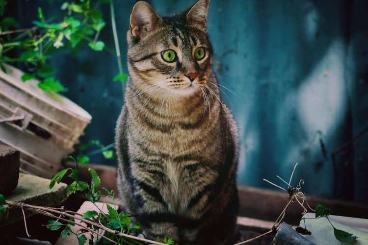 Portrait of cat sitting outdoors