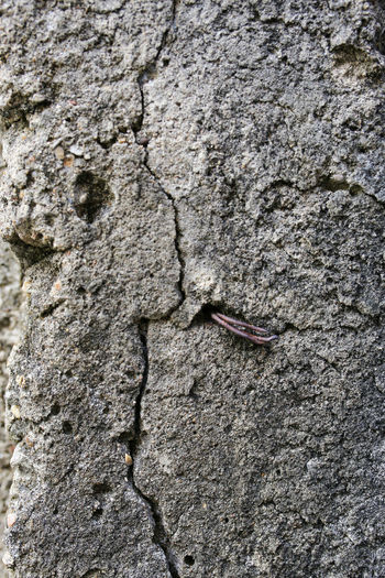Backgrounds Close-up Concrete Wall Day Fracture Full Frame Hiatus Nature No People Outdoors Rock Rough Solid Textured  Tree Trunk