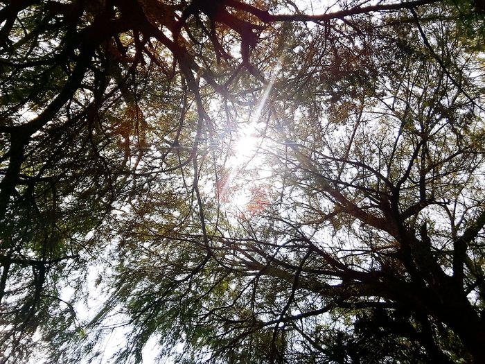 Dos rayitos de luz en un mismo instante. ¿Cómo se puede tener tanta suerte? (Y qué luz da lo que estaba al lado mío). Tree And Sky Luz Rays Of Light Life Is Beautiful She Nopeople Nature Photography Natural Light