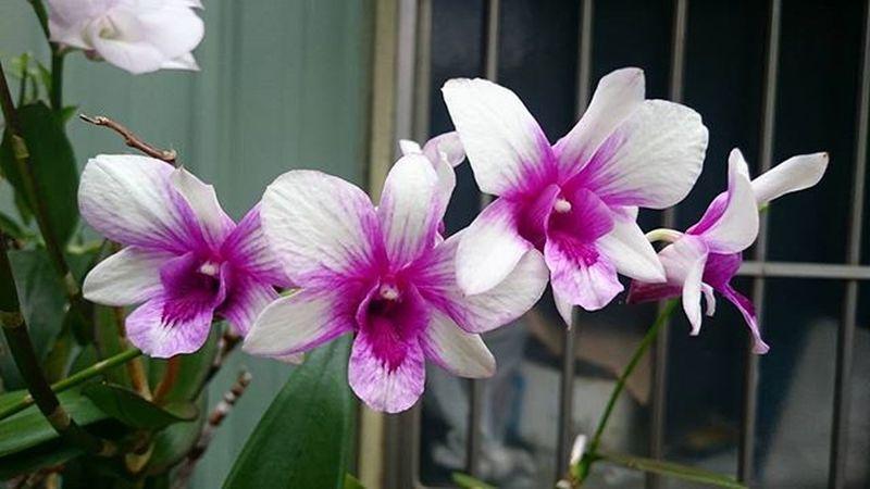 Phonglan Flowers Hoa Kaohsiung Taiwan Sunday