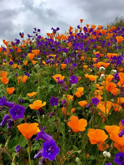 Wildflower Beauty In Nature Landscape Flowering Plant Flower Plant Beauty In Nature Fragility Vulnerability  Growth Freshness Petal Flower Head Nature Close-up Cloud - Sky Inflorescence Multi Colored Yellow No People Land Sky Field