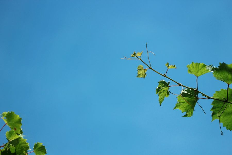 Tree Clear Sky Branch Blue Leaf Sky Plant Green Color