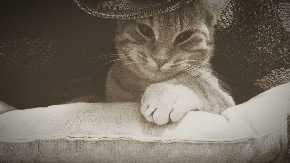 Cat Cats Cat♡ Underthetable Animals Animal Animal Themes